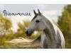 Centre équestre : horshouse2013
