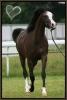 Centre équestre : Au paradis des chevaux!