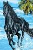 Centre équestre : Le Horse Night
