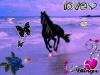 Centre équestre : les amours