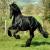 Au plaisir des chevaux