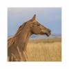 Amber2610 - éleveur de chevaux Horzer