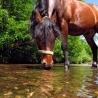 miss-momo80 - éleveur de chevaux Horzer