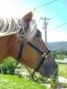 lgaitaz - éleveur de chevaux Horzer