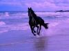comi2905 - éleveur de chevaux Horzer