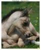 Sprite54 - éleveur de chevaux Horzer