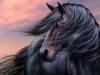 Fandecheval68 - éleveur de chevaux Horzer
