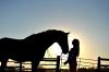 eme34 - éleveur de chevaux Horzer