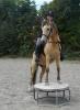Titoo22 - éleveur de chevaux Horzer