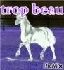 loulou-nana - éleveur de chevaux Horzer