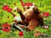 Gaia1235 - éleveur de chevaux Horzer