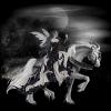 malvina115 - éleveur de chevaux Horzer