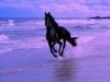 suine67 - éleveur de chevaux Horzer