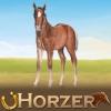 Poney2299 - éleveur de chevaux Horzer