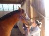 qualysto - éleveur de chevaux Horzer