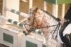 milou321 - éleveur de chevaux Horzer