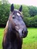 Jumping-girl - éleveur de chevaux Horzer