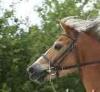 Horseslove9 - éleveur de chevaux Horzer