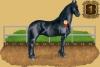 Unic - éleveur de chevaux Horzer
