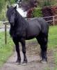 kubillai - éleveur de chevaux Horzer