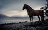 momolaetitia - éleveur de chevaux Horzer