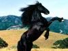 elbazy - éleveur de chevaux Horzer