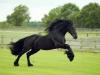 JosieLoren - éleveur de chevaux Horzer