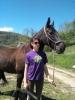 Maxame96 - éleveur de chevaux Horzer