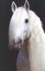 alizee9999 - éleveur de chevaux Horzer