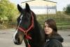 ara654 - éleveur de chevaux Horzer