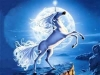 eva66300 - éleveur de chevaux Horzer