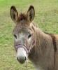 chatonsclara - éleveur de chevaux Horzer