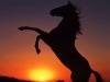 chevalPASIONdore - éleveur de chevaux Horzer