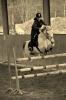 ClaireH.L - éleveur de chevaux Horzer
