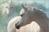 julienor - éleveur de chevaux Horzer