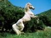 juju15031402 - éleveur de chevaux Horzer