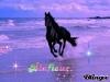 blafleur - éleveur de chevaux Horzer