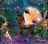 kenza46300 - éleveur de chevaux Horzer