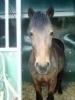 cocogirl93160 - éleveur de chevaux Horzer