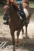 bellalea41 - éleveur de chevaux Horzer