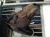 miss59000 - éleveur de chevaux Horzer
