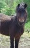 mathilde57590 - éleveur de chevaux Horzer