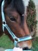 Alexia.cavalier - éleveur de chevaux Horzer