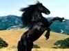 ErzaScarlett78 - éleveur de chevaux Horzer