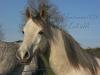 lauriane.jaleo - éleveur de chevaux Horzer