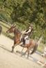 Meline3810 - éleveur de chevaux Horzer