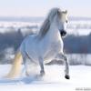 stella234 - éleveur de chevaux Horzer