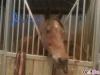 florybelle - éleveur de chevaux Horzer