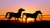 oceannedesbiens - éleveur de chevaux Horzer