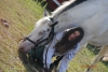 Leblack - éleveur de chevaux Horzer